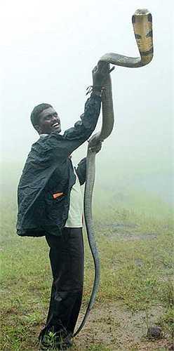 Van Suresh hiện tham gia vào nhiều tổ chức truyền thông, nhằm nâng cao nhận thức của con người với loài động vật này.