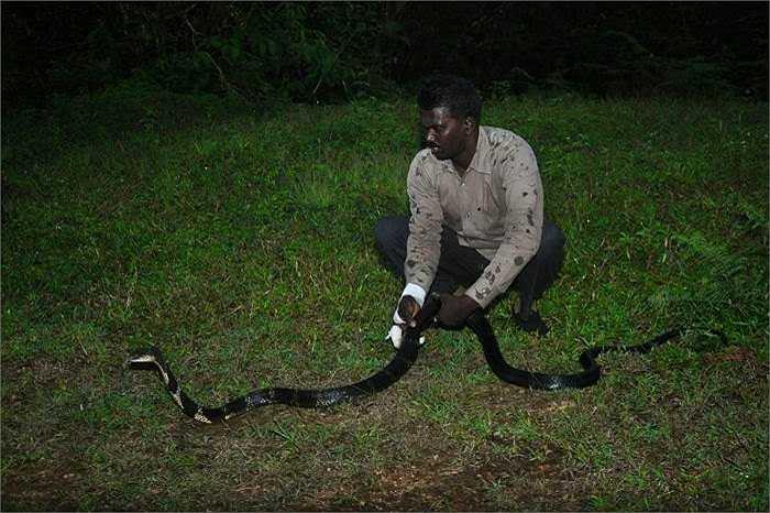 Với tài năng của mình, anh đã được mời làm một công việc của chính phủ, đó là quản lý công viên rắn. Tuy nhiên, Vava Suresh đã từ chối công việc lương cao đó. Anh thích việc một mình lủi thủi đi giải cứu loài rắn.
