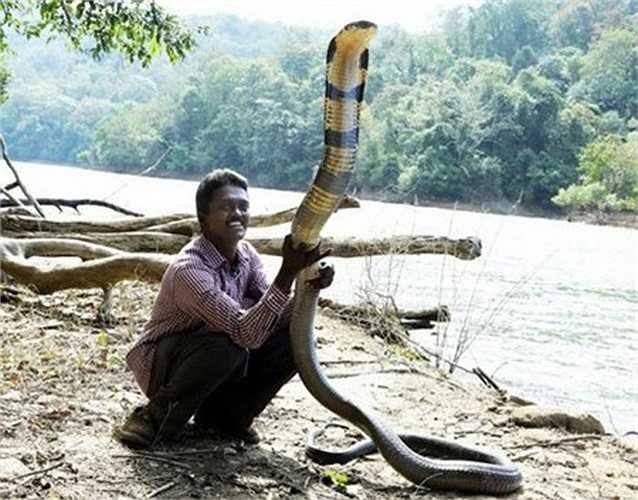 Tại Kerala, có một người đàn ông nổi tiếng, được mệnh danh là 'người rắn', bởi anh sống giữa quần thể rắn hàng vạn con.