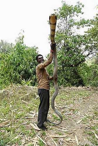 Vava Suresh sinh ra trong một gia đình nghèo ở bang. Anh bảo, sứ mệnh của anh trên cuộc đời này là bảo vệ loài rắn. Chính vì thế, từ nhỏ, anh đã không sợ hãi rắn.
