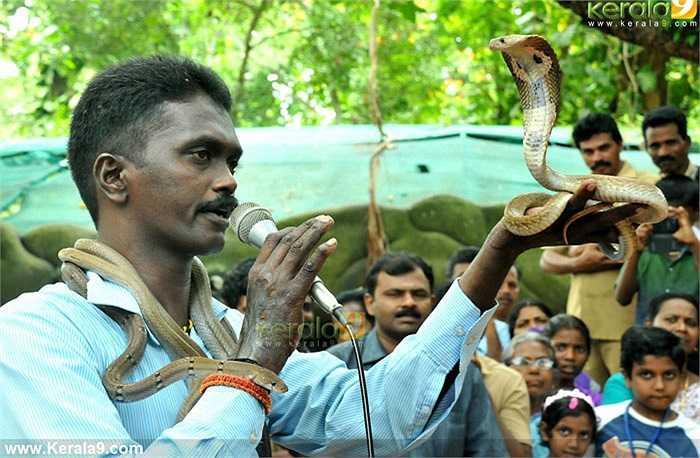 Theo Vava Suresh, rắn là loài động vật đáng yêu, thích sự nhẹ nhàng. Chính vì thế, Vava Suresh luôn dành cho chúng sự chăm sóc, âu yếm. Lúc nào anh cũng nhẹ nhàng với rắn.