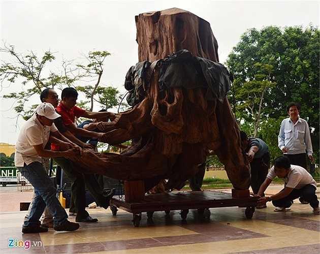 1. Thuộc họ gỗ sưa mộc vàng (tên khoa học là Dalbergia Tonkinensis Prain), một khúc gỗ sưa rỗng ruột có đường kính hơn 1 m, dài hơn 2 m, nặng khoảng trên 2 tấn được phát hiện tại suối Troóc, xã Phúc Trạch, huyện Bố Trạch (Quảng Bình) vào ngày 23/2. Khúc gỗ sưa này được định giá lên đến gần 17 tỷ đồng. Ảnh: Văn Được.