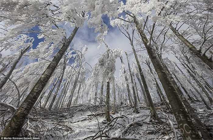 Các lớp băng đọng lại trên thân cây