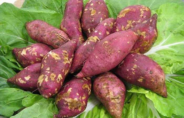 Khoai lang: Đây là một trong các loại thực phẩm có nhiều chất kali. Một gói khoai lang có thể chứa 694 mg kali, chất xơ, beta carotene và một lượng tinh bột có thể cung cấp đủ năng lượng cho cơ thể trong ngày.
