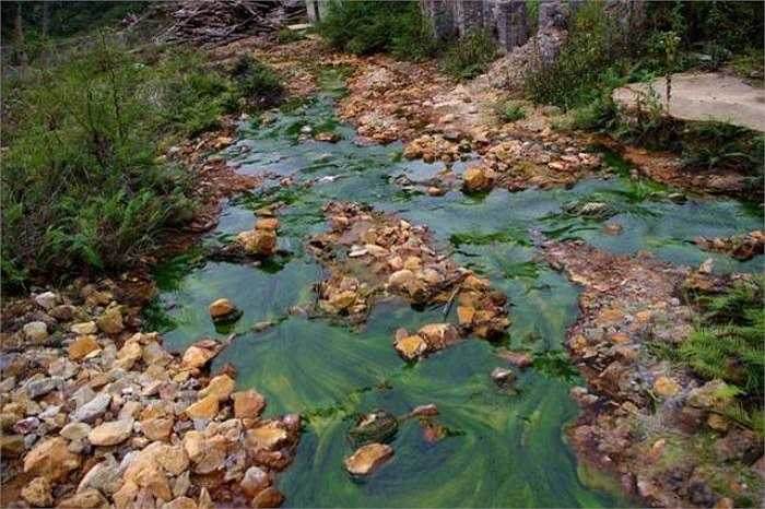 7. Nhiễm độc tính kim loại nặng: Sự hiện diện của các kim loại độc hại như quá nhiều thủy ngân, nhôm, cadmium, arsenic, chì và niken... gây tác hại đến đường ruột của chúng ta.