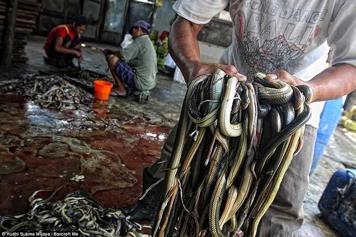 Một công nhân ôm hàng chục con rắn đã chết đi lột da