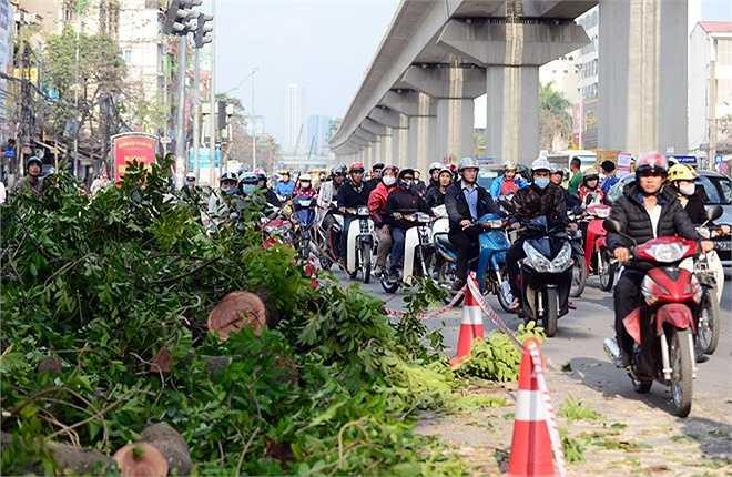 Đường Nguyễn Trãi bị ùn ứ vào đầu giờ chiều 28/1, do việc chặt hạ chiếm nửa lòng đường.