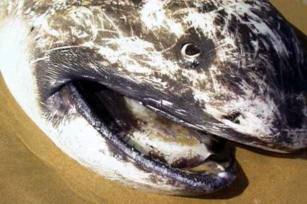 Con cá mập tương tự được tìm thấy vào năm 2002 tại vùng biển Nam Phi