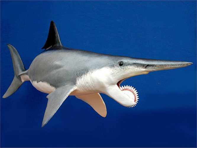 Với tên gọi Cá mập 'Helicoprion', con thủy quái khổng lồ này sống cách đây 250 triệu năm. Nó nặng gần nửa tấn và dài đến gần 8m, to hơn bất cứ loài cá nào ở đại dương. Chúng sở hữu chuỗi răng nhọn như dao có hình cong ở hàm dưới. Khi con quái vật này cắn, con mồi của nó sẽ bị xẻ dọc một đường ở giữa thay vì bị cắn nát như với cá mập bình thường.