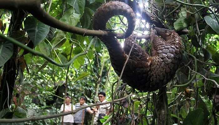 Tê tê sống trên cây hoặc dưới đất - Với những móng vuốt khỏe mạnh, loài vật này có thể đào hố dưới đất hoặc leo trèo trên cây. Thực tế thì các loài tê tê khác nhau có môi trường sống khác nhau, trên cây hoặc dưới đất