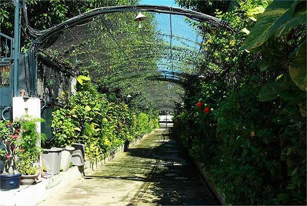 Khu biệt thự có lối vào là một khu vườn xanh mát.