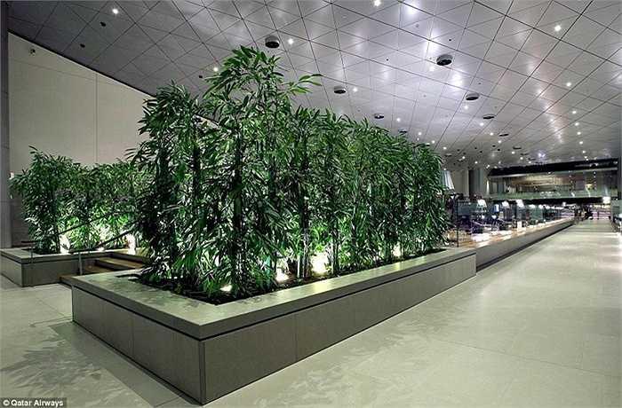 Sân bay này nằm trên diện tích hơn 2.200ha.