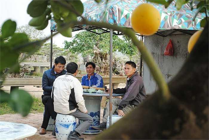 Thợ làm vườn và khách khứa đến thăm vườn ngồi uống trà và trò chuyện với chủ đề xung quanh cây bưởi giá trăm triệu này. (Theo VNN)
