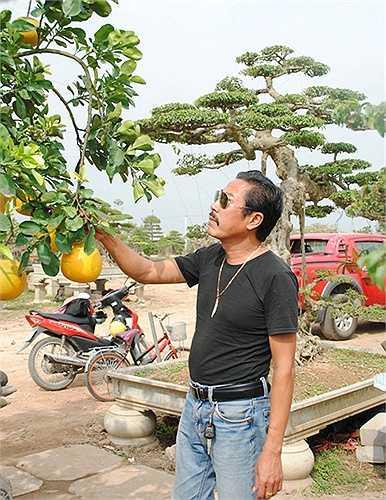 Với kinh nghiệm hơn 10 năm chơi cây cảnh, ông Chu Văn Mạnh vừa nhìn là đã quyết định mua cây bưởi về chơi. Vườn cây của ông Mạnh hiện tại có 3 công nhân chuyên làm nhiệm vụ chăm sóc cây cảnh. (Theo VNN)