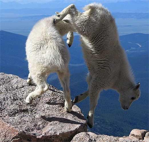 Vui đùa trên đỉnh núi cheo leo
