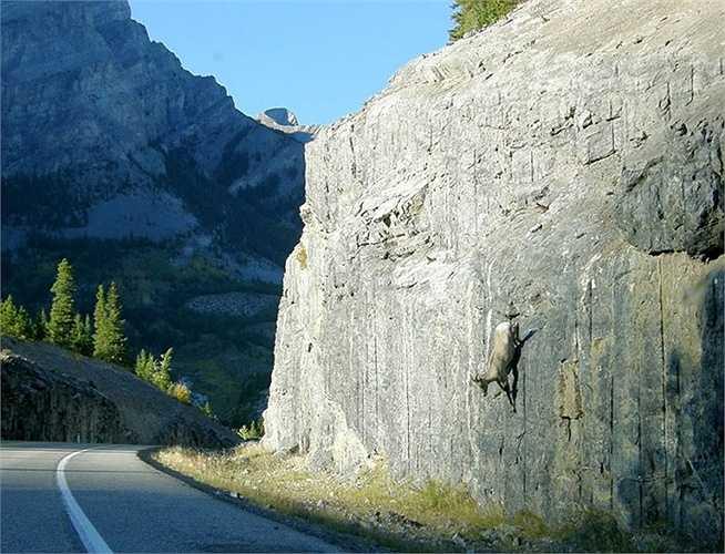 Lao từ vách đá dựng đứng xuống đường