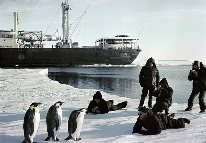 Các thủy thủ tàu phá băng Ob chụp ảnh chim cánh cụt ở Nam Cực