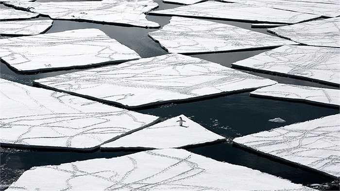 Chim cánh cụt di chuyển trên những tảng băng trôi
