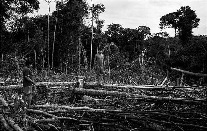 Mặc dù sống trong rừng sâu, nhưng người Awa đang đối diện với nguy cơ mất môi trường sống, bởi lâm tặc phá rừng rất mạnh mẽ.