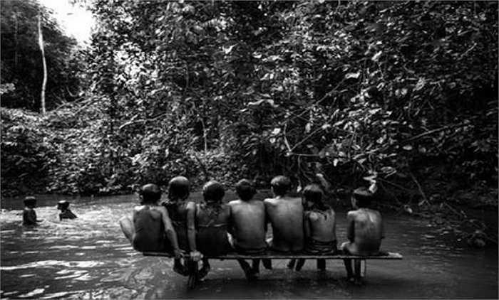 Bọn lâm tặc không chỉ hủy diệt môi trường sống, mà còn đe dọa tính mạng cư dân bộ lạc Awa.