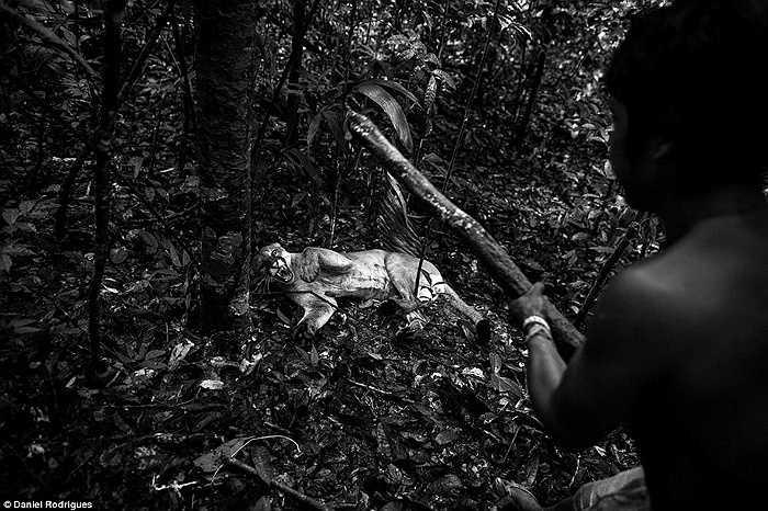 Những con thú hung dữ của đại ngàn cũng không thoát khỏi mũi tên của thợ săn Awa.