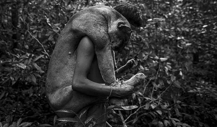 Người Awa sống phụ thuộc hoàn toàn vào rừng. Thú rừng là thức ăn chính của họ.