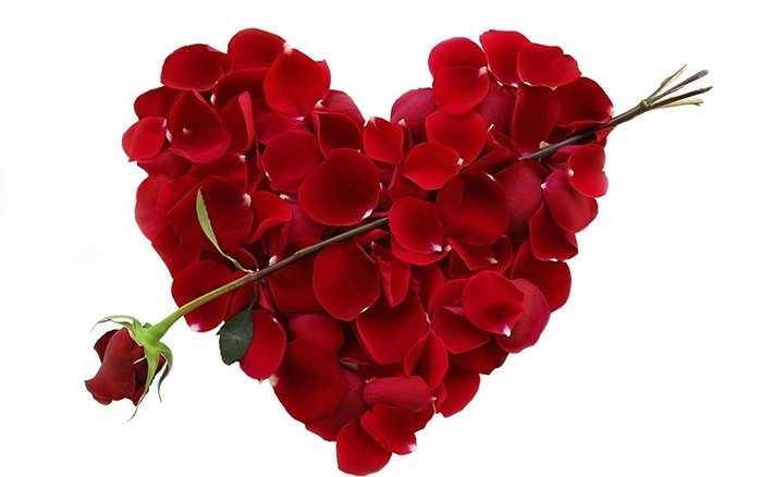 Theo ước tính, vào ngày lễ Valentine, 224 triệu bông hoa hồng được sử dụng.