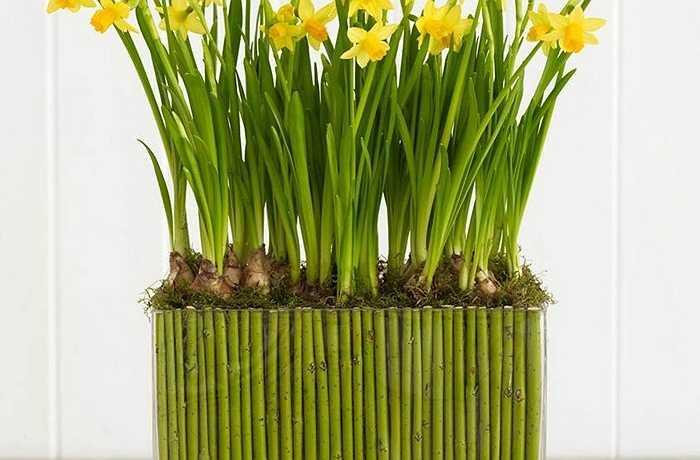 Sự kết hợp giữa hoa thuỷ tiên vàng và cành dương đào mang lại vẻ đẹp ảo ảnh và rực rỡ cho bất kỳ bàn ăn, cửa sổ hoặc thậm chí phòng tắm. Sử dụng một bình thủy tinh vuông làm cho phong cách trình bày chuyên nghiệp này trở nên đơn giản hơn