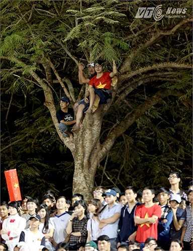 Cảnh tượng trèo cây này có thể nguy hiểm nhưng ở góc độ nào đó là một tín hiệu vui và đáng mong ước của mỗi sân đấu. (Ảnh: Quang Minh)