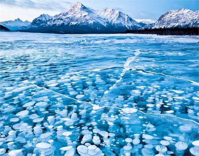 Vẻ đẹp của bong bóng trong lòng hồ Abraham bị đóng băng ở Canada