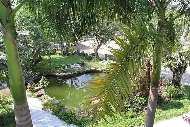 Trong khuôn viên biệt thự của tướng Thạch có cả vườn cau, ao cá và nhiều cây cảnh quý hiếm.