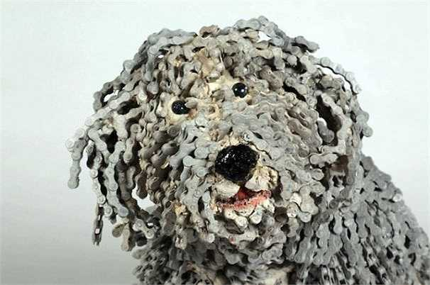 Giống chó Maltese