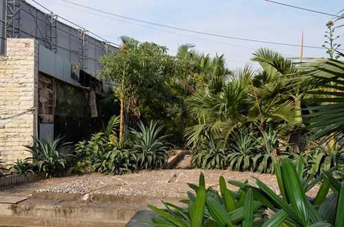 Cảnh hoang tàn, rậm rạp ở Chợ Sắt Hải Phòng.