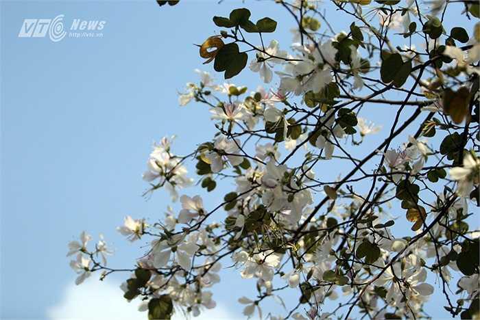 Nơi nàng nằm xuống mọc lên một loại cây có hoa trắng, có hương thơm, mật ngọt.