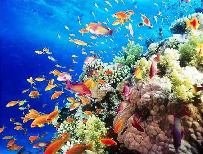 Được biết đến như một tụ điểm du lịch nổi tiếng, bãi biển Sharm El Luli, Ai Cập là một bãi biển thích hợp cho thám hiểm dưới nước vì hệ sinh thái đa dạng của chúng.