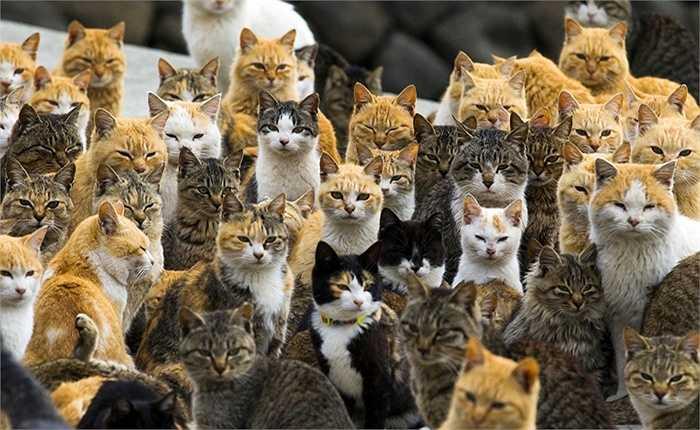 Hàng trăm con mèo đang sống trên đảo Aoshima