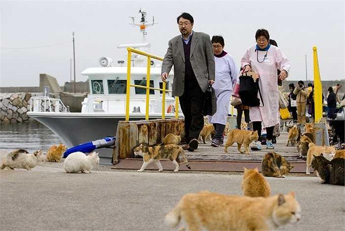 Mèo bao vây du khách khi từ tàu lên đảo