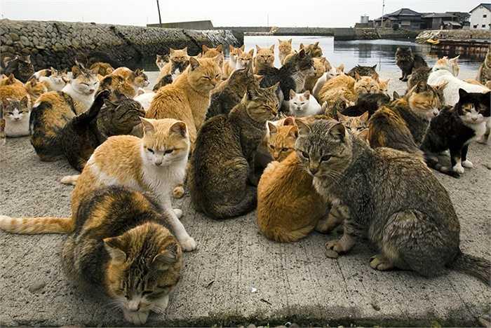 Đám mèo tụ tập ở cảng