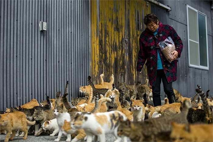 Người phụ nữ bị đàn mèo bao vây