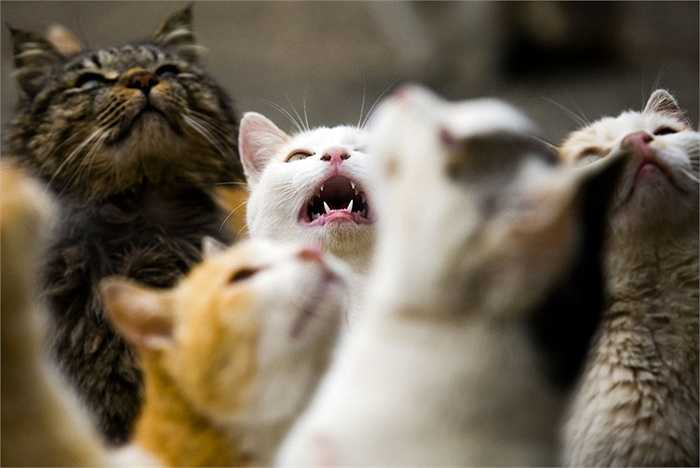 Đàn mèo đòi ăn