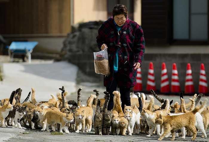Người phụ nữ chuẩn bị cho lũ mèo ăn