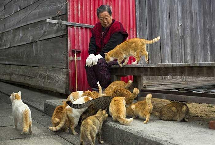 Người phụ nữ ngồi ngắm đàn mèo ăn