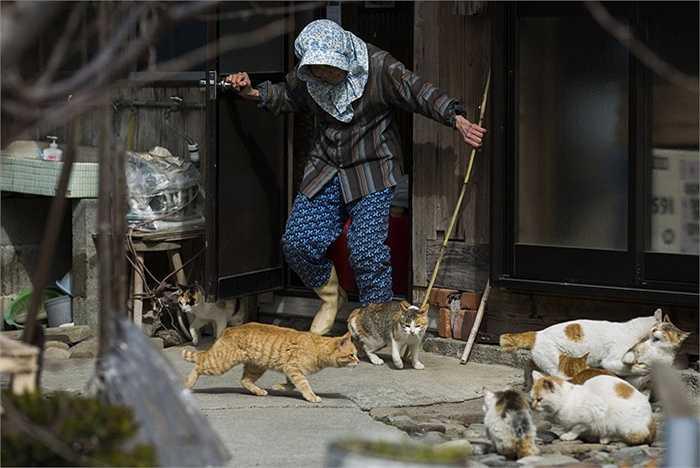 Một người phụ nữ xua đàn mèo ra khỏi cửa nhà