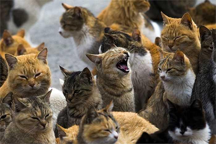 Những con mèo ở khắp nơi trên đảo Aoshima