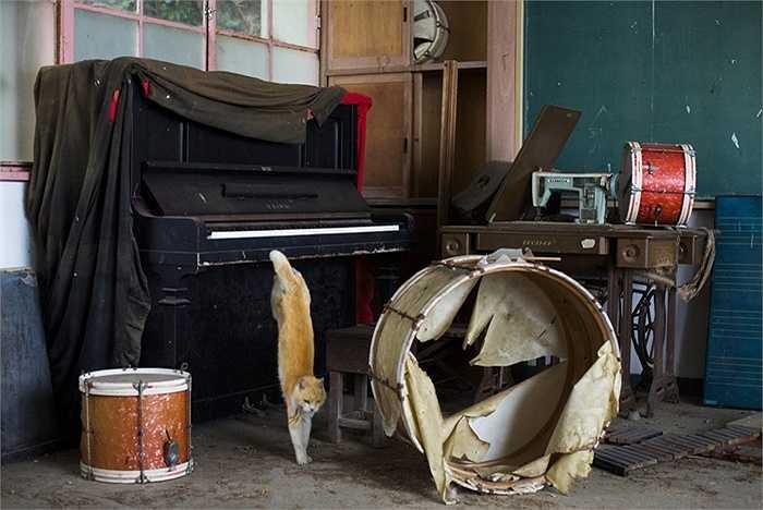 Lang thang bên các bộ nhạc cụ cũ kỹ