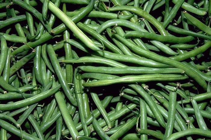 Đỗ que: Năng lượng do đỗ que mang lại rất ít (25 calo trong 100g). Quả đậu còn rất giàu vitamin C (9mg trong 100g). Ngoài ra, trong thành phần đỗ que còn có beta-caroten, vitamin A và muối khoáng.