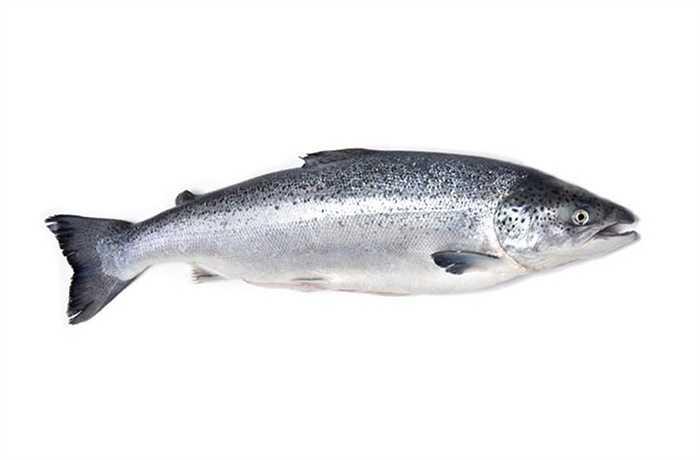 Đừng ăn cá hồi vào ngày này bởi nó sẽ mang lại điều rủi cho bạn