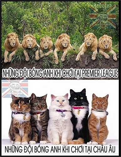 Những đội bóng Anh khi chơi ở Premier League thì như sư tử, còn tại Champions League lại như những chú mèo