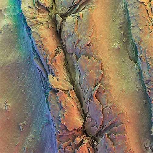 Đây là vân tay ở đầu ngón tay của con người khi được nhìn dưới kính hiển vi.