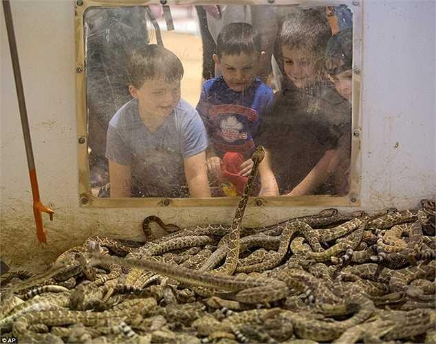Lễ hội này ban đầu được tổ chức để kiểm soát sự gia tăng số lượng loài rắn chuông ở đây